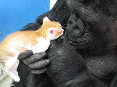 Koko_Kitty_Visit.jpg